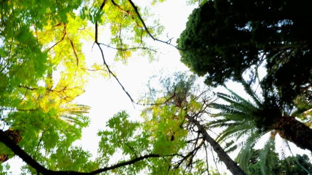 vídeos y material grabado en eventos de stock de sol a través de bosque - mancha solar