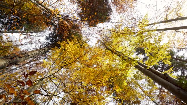 Sonne durch die Blätter im Herbst.