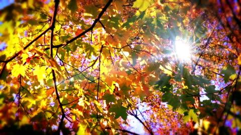 stockvideo's en b-roll-footage met sun through leaves. - autumn