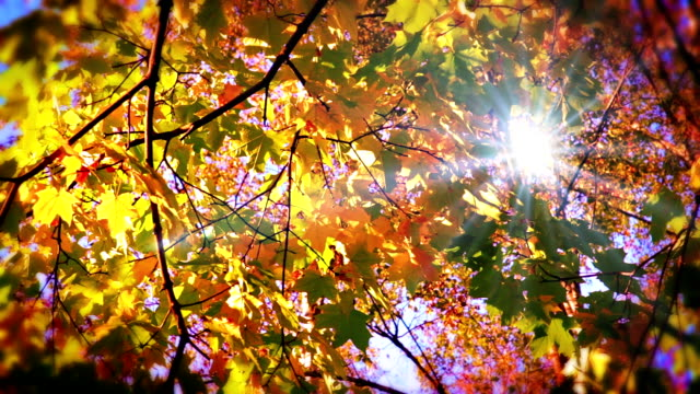 stockvideo's en b-roll-footage met sun through leaves. - herfst