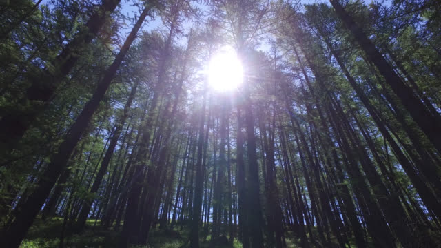 sun through the trees of a forest - named wilderness area stock videos & royalty-free footage