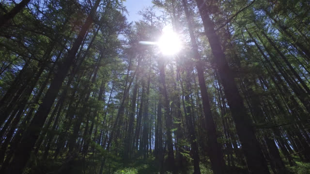 sun through the trees of a forest - treetop stock videos & royalty-free footage