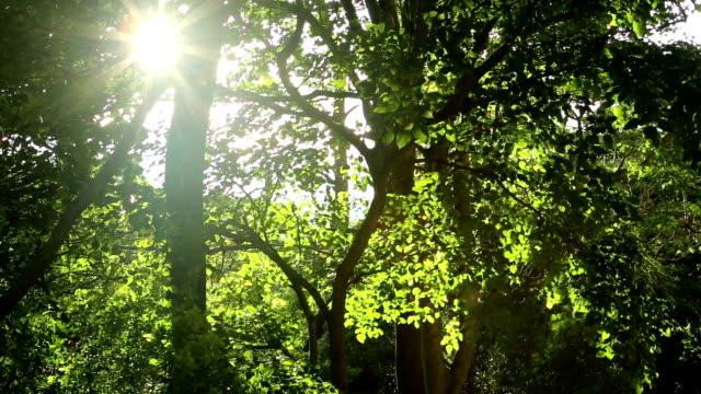 sun through the trees - twilight stock videos & royalty-free footage
