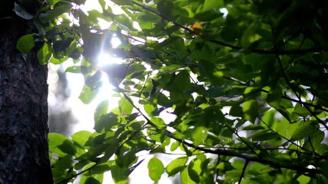 HD sun through the trees