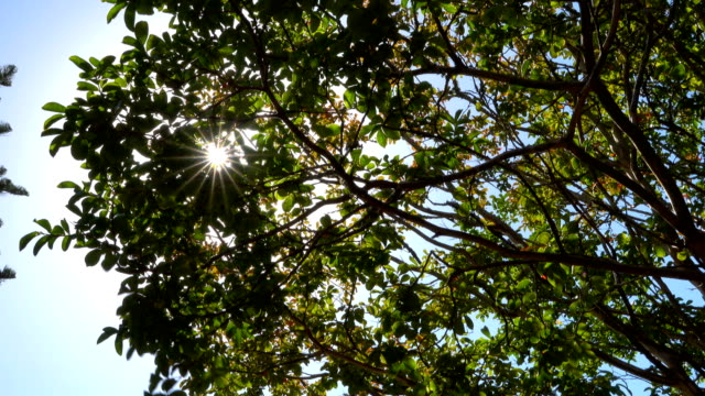 sun through tree - named wilderness area stock videos & royalty-free footage