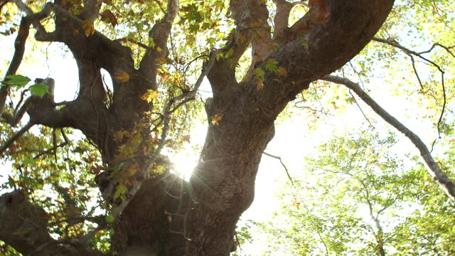 sun thru the tree - wiese stock videos & royalty-free footage