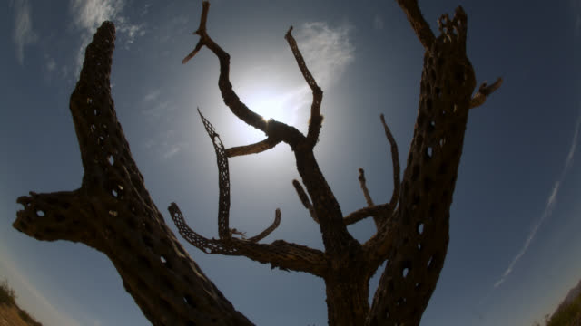 tl sun tracks in sky over dead cholla cactus, usa - durability stock videos & royalty-free footage