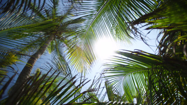 vidéos et rushes de tl sun tracks over coconut palms - vue en contre plongée