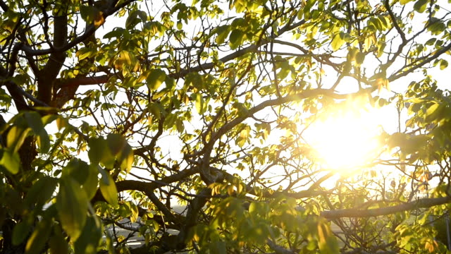 sun watching through trees and leaves - solar flare stock videos and b-roll footage