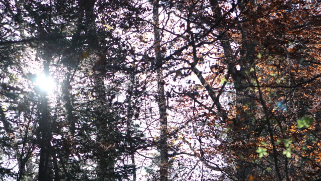 sun watching through trees and leaves - light natural phenomenon stock videos and b-roll footage