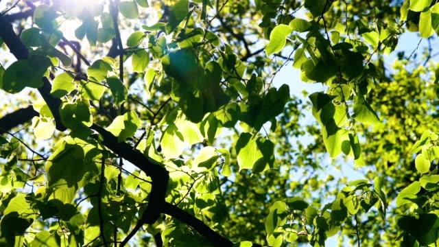 sol, observando através de árvores e folhas