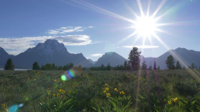 sun, wildflower, mountain and lake - weather stock videos & royalty-free footage
