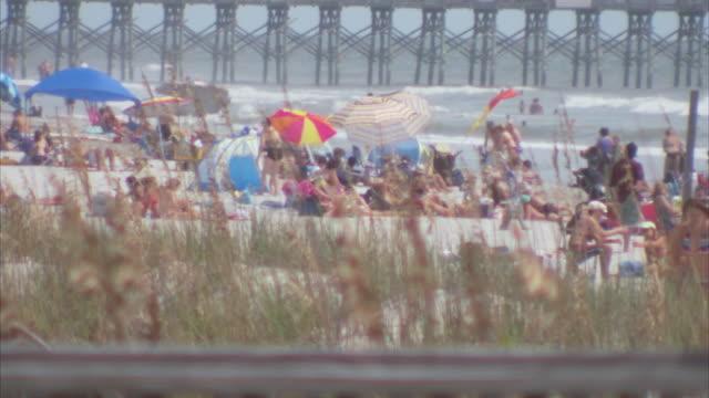 ms sunbathers on beach behind high grass / folly beach, south carolina, united states - charleston south carolina stock videos & royalty-free footage