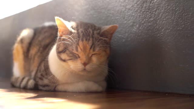 vídeos y material grabado en eventos de stock de el sol duerme el gato - dormitar