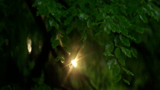 sunbeam shining between beeches. mountain forest - beech tree stock videos and b-roll footage