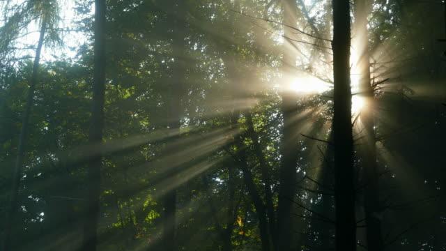 sunbeams at foggy woodland