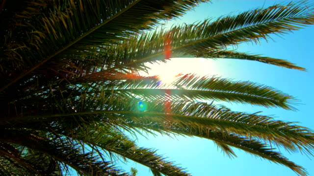 hd: sunbeams coming through palm frond - frond stock videos & royalty-free footage
