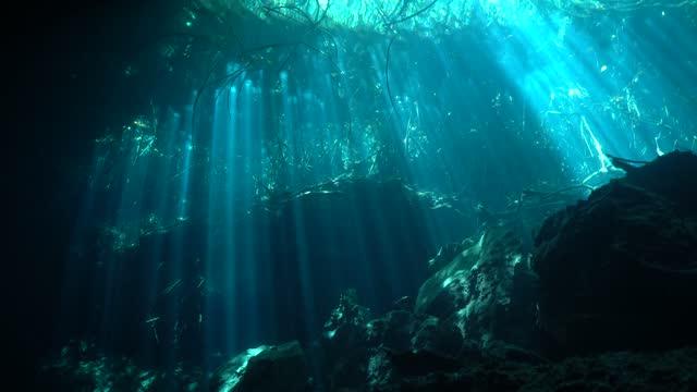 vidéos et rushes de sunbeams in eden cenote - plongée sous marine autonome