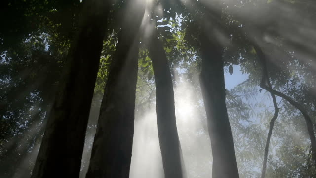 Sunbeams in Foggy Forest