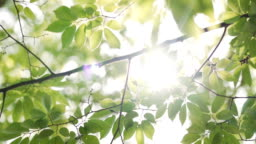 Sunbeams peaking through lush green leaves.