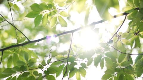 solstrålarna topp genom frodiga gröna blad. - inspiration bildbanksvideor och videomaterial från bakom kulisserna