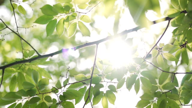 sunbeams peaking through lush green leaves. - foglia video stock e b–roll