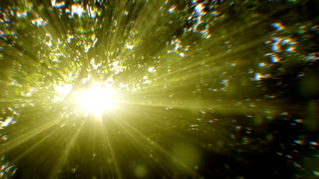 sunbeams seen through trees (loopable) - green color stock videos & royalty-free footage