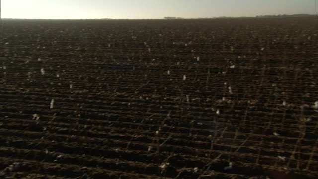 sunbeams shine above plowed rows of stubble. - stubble stock videos & royalty-free footage