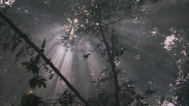 ms la pan sunbeams shining through trees in tropical forest / siem reap province, cambodia - 木漏れ日点の映像素材/bロール
