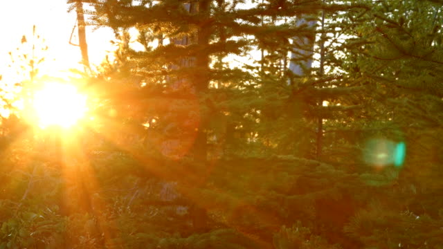 Sunburst lens flare and evergreen pine forest macro detail glowing mountain sunset 2 Mt. Hood Spring Forest Oregon Cascade Mountains