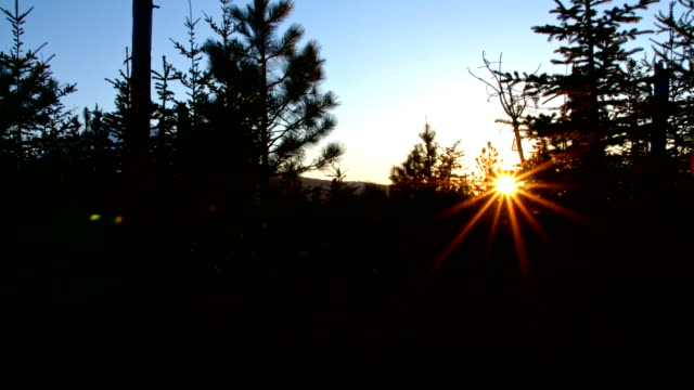 Sunburst lens flare and evergreen pine forest silhouette glowing mountain sunset 1 Mt. Hood Spring Forest Oregon Cascade Mountains