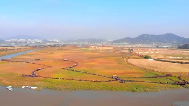 suncheonman bay reed field / suncheon-si, jeollanam-do, south korea - jeollanam do stock videos & royalty-free footage