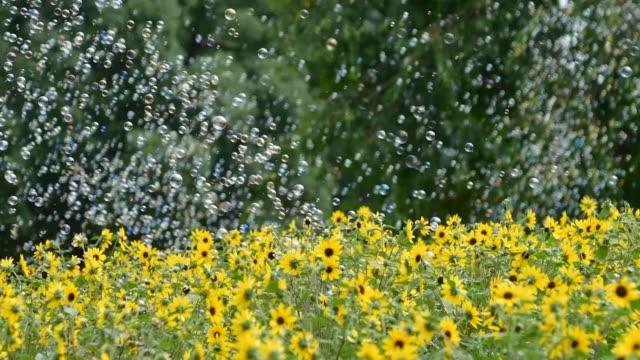 sunfinity sunflowers with soap bubbles wafting in gentle breeze - 里山点の映像素材/bロール