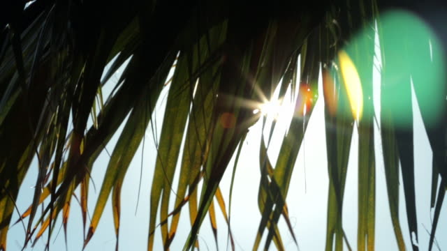 sunflares through palm leaves - palmenblätter stock-videos und b-roll-filmmaterial