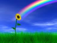 Sunflower & Rainbow