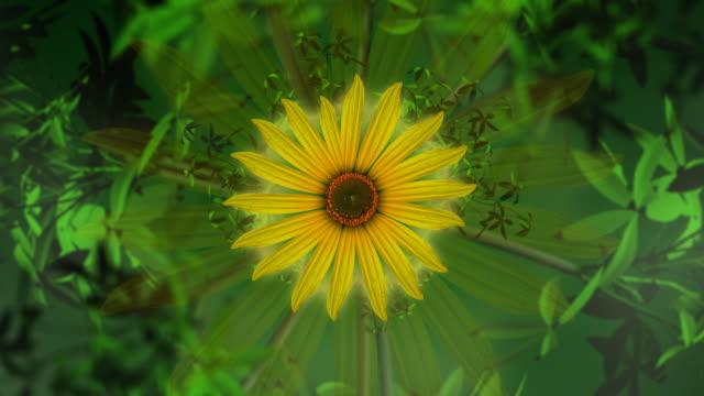 Sonnenblume und Eröffnung demnächst