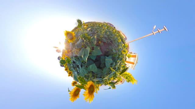 sonnenblumenfeld auf little planet format - 360 grad panorama stock-videos und b-roll-filmmaterial