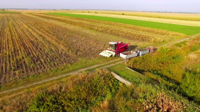 sunflower harvester pouring grain - common sunflower stock videos & royalty-free footage