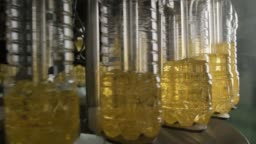 Sunflower oil in the bottle moving on production line.
