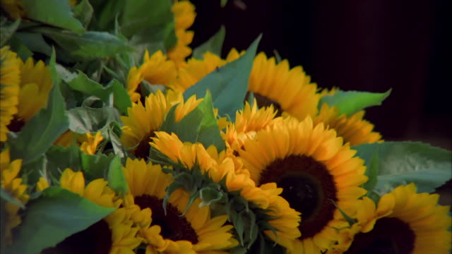 Sunflowers fill a pot at a flower market in Amsterdam. Available in HD.