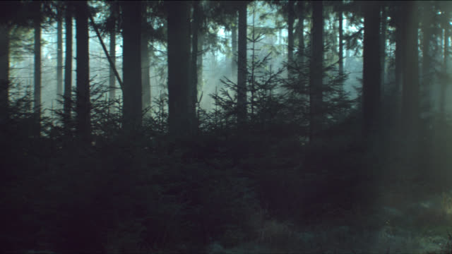 stockvideo's en b-roll-footage met sunight illuminate the forest floor. - schaduwe
