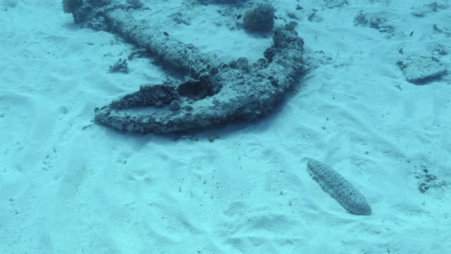 sunken anchor on the seabed - seabed stock videos & royalty-free footage