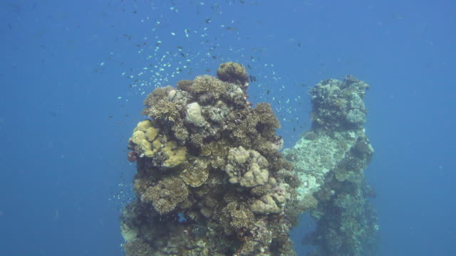 stockvideo's en b-roll-footage met sunken battleship during the world war ii, palau - geruïneerd