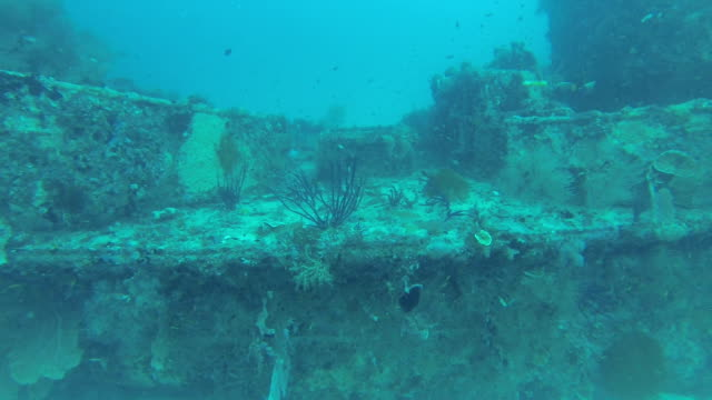 sunken shipwreck diving in maldives - indian ocean stock videos & royalty-free footage