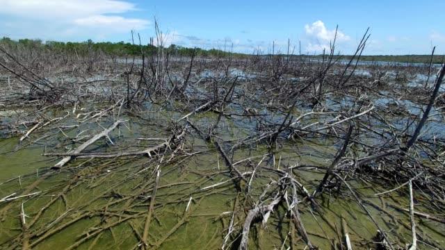 Sunken trees in a tropical swamp