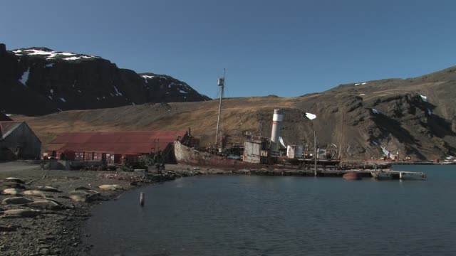 ws, sunken whaling ship at abandoned whaling station grytviken, south georgia island, falkland islands, british overseas territory - südlicher seeelefant stock-videos und b-roll-filmmaterial