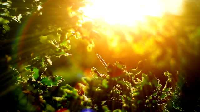 sunlight and branches (loopable) - morning stock videos & royalty-free footage