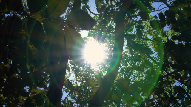 sunlight and flare through trees - looking up stock videos & royalty-free footage