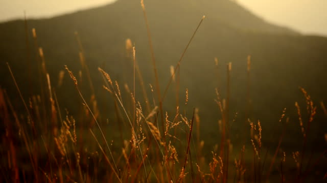 Sunlight and grass behind big mountain