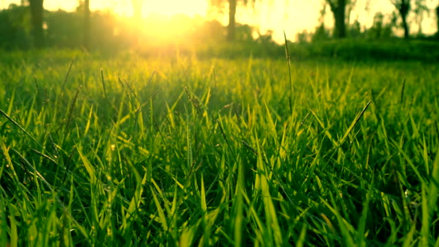 sunlight and grass - lawn stock videos & royalty-free footage